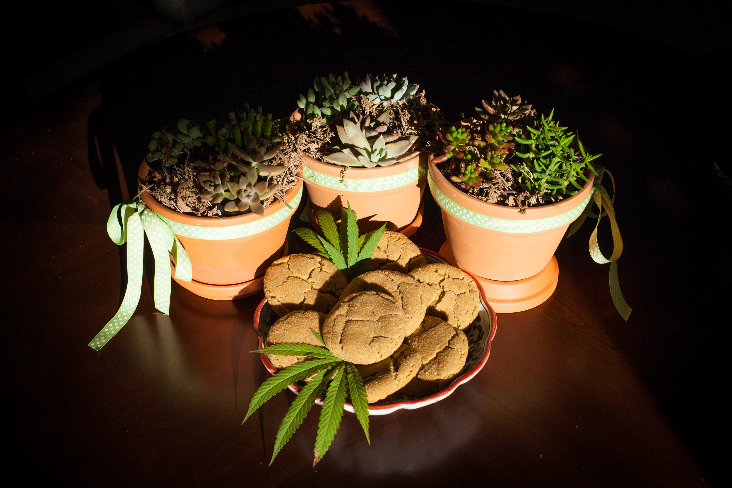 Snickerdoodle-and-Cactus